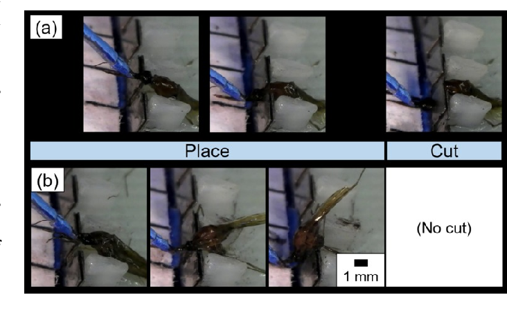Figure 3 for A Mosquito Pick-and-Place System for PfSPZ-based Malaria Vaccine Production