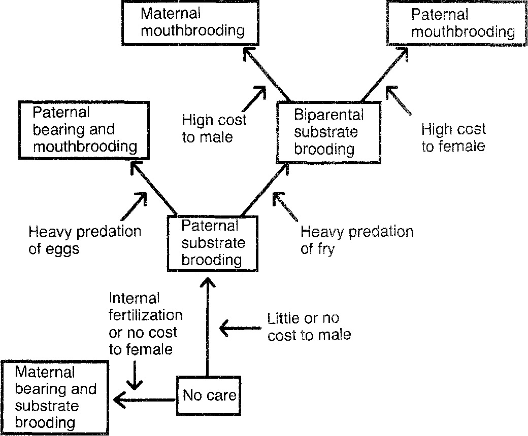 Fig. 1. A scenario for the evolution of parental care in fishes and the parental costs associated with the different parental modes.