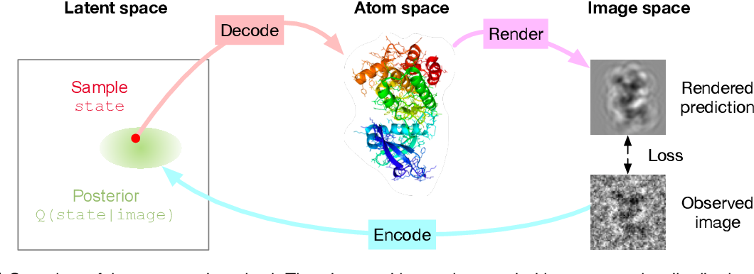 Figure 1 for Inferring a Continuous Distribution of Atom Coordinates from Cryo-EM Images using VAEs