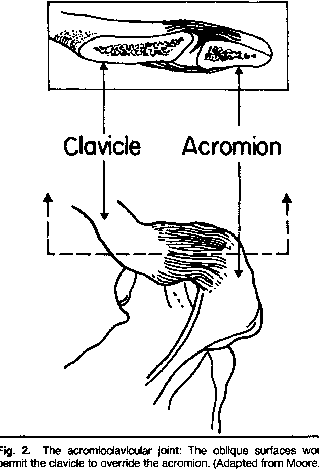 Figure 2 from Functional anatomy of the shoulder complex. - Semantic ...