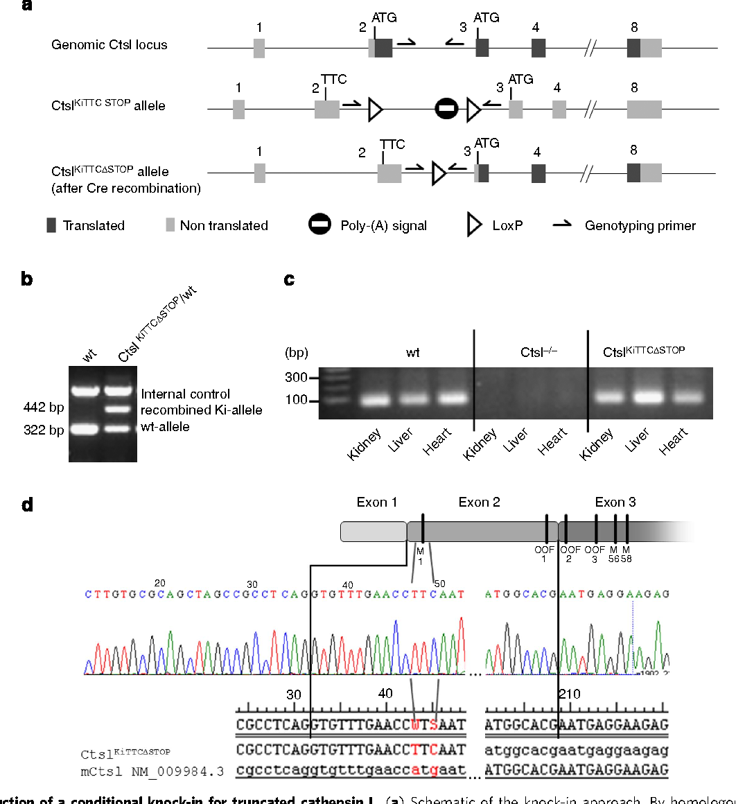 Out-of-frame start codons prevent translation of truncated nucleo ...