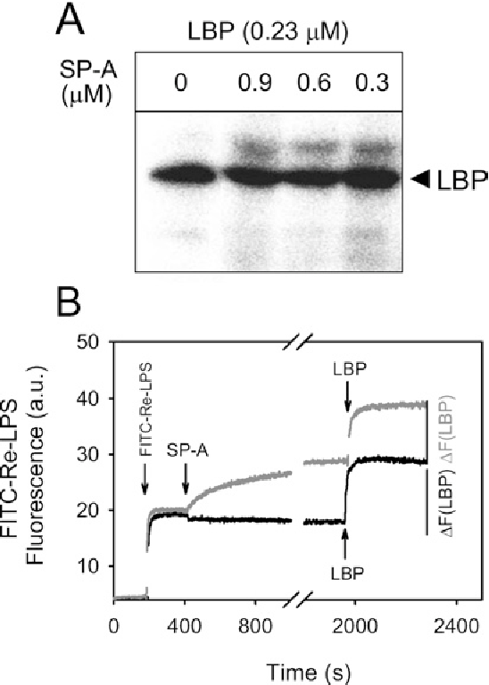Figure 6 SP-A does not inhibit the binding of LBP to Re-LPS