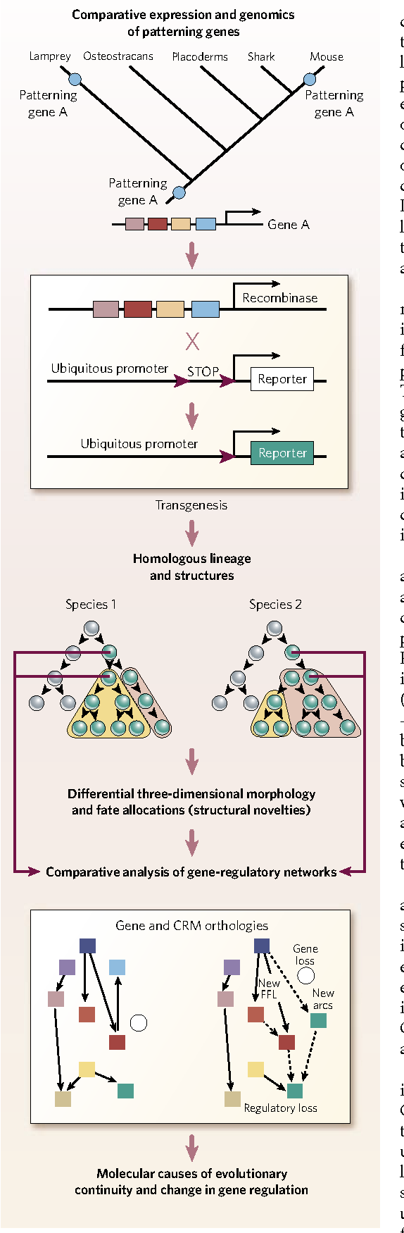 Figure 1 from Evolution of anatomy and gene control - Semantic Scholar