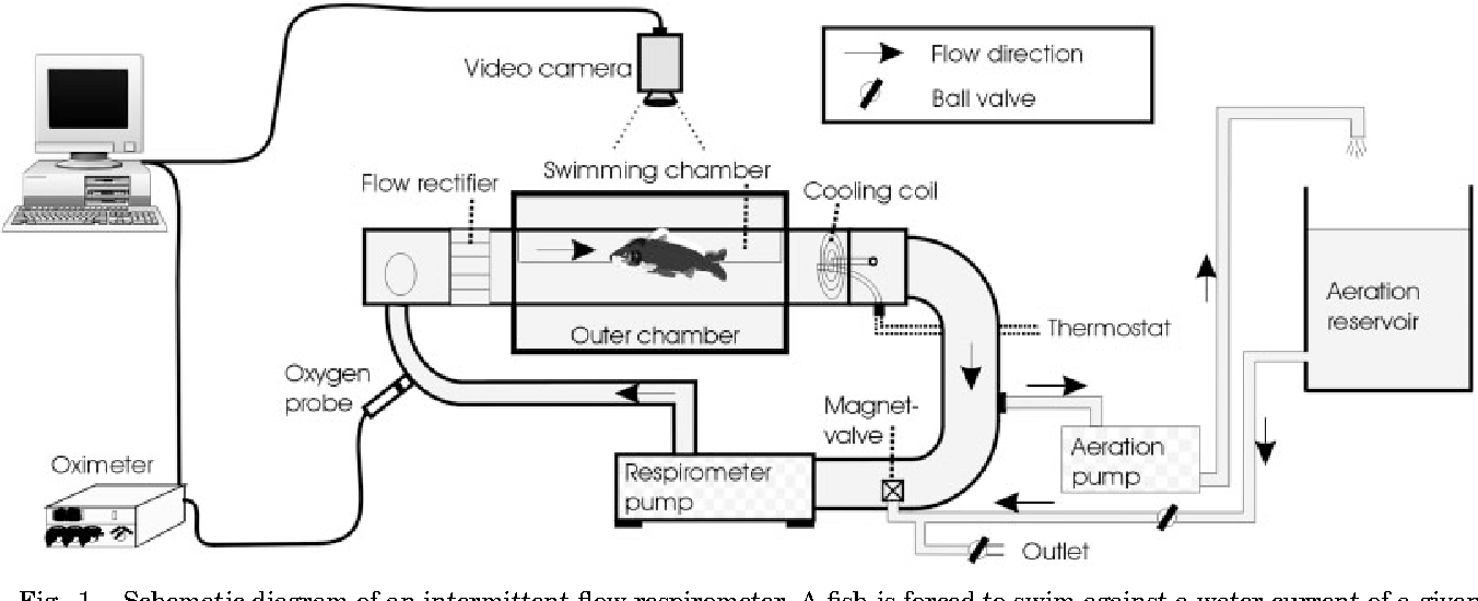 Figure 1 From Modelling Energetic Costs Of Fish Swimming Semantic