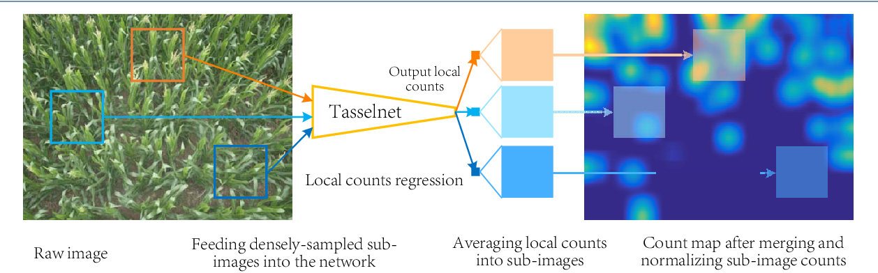 Figure 3 for TasselNet: Counting maize tassels in the wild via local counts regression network