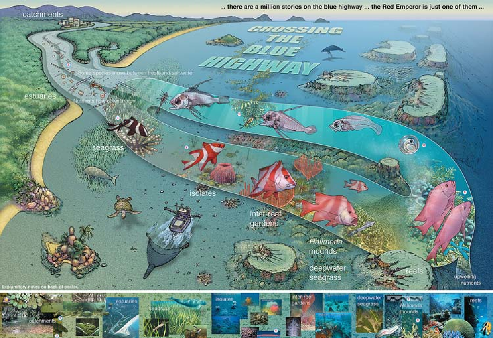 Fig. 1 The Blue Highway: a poster used to effectively communicate the concepts of connectivity on the Great Barrier Reef (www.byoguides. com/rk/Publications.html; reprinted with permission of the author, Russell Kelley, and the Australian Coral Reef Society). The poster illustrates the journey of the Red Emperor (Lutjanus sebae) as, at different stages of their growth and development, they utilise different habitats across the continental shelf. Any change in the natural habitat, such as pollution, can have dramatic effects elsewhere in this interconnected system (Cappo and Kelley 2001)