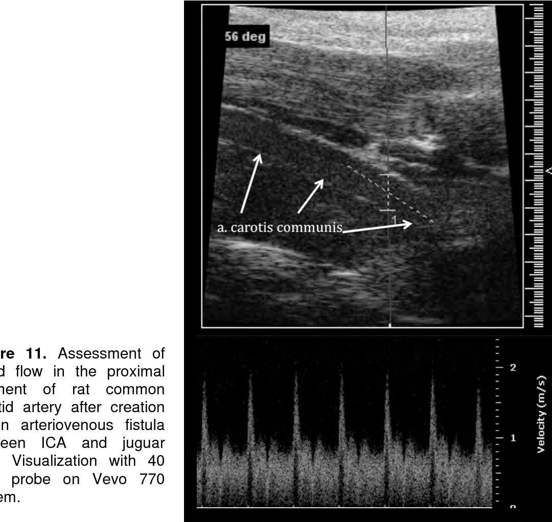 PDF] Vascular repair mechanisms : Experimental