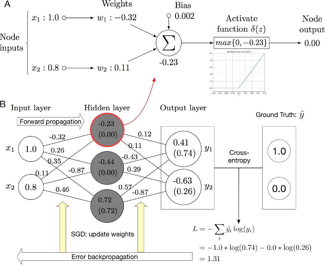 Figure 2 for Deep learning in bioinformatics: introduction, application, and perspective in big data era