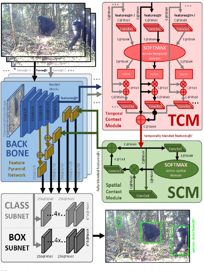 Figure 1 for Great Ape Detection in Challenging Jungle Camera Trap Footage via Attention-Based Spatial and Temporal Feature Blending
