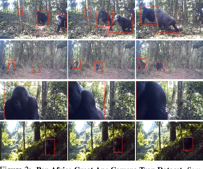 Figure 3 for Great Ape Detection in Challenging Jungle Camera Trap Footage via Attention-Based Spatial and Temporal Feature Blending