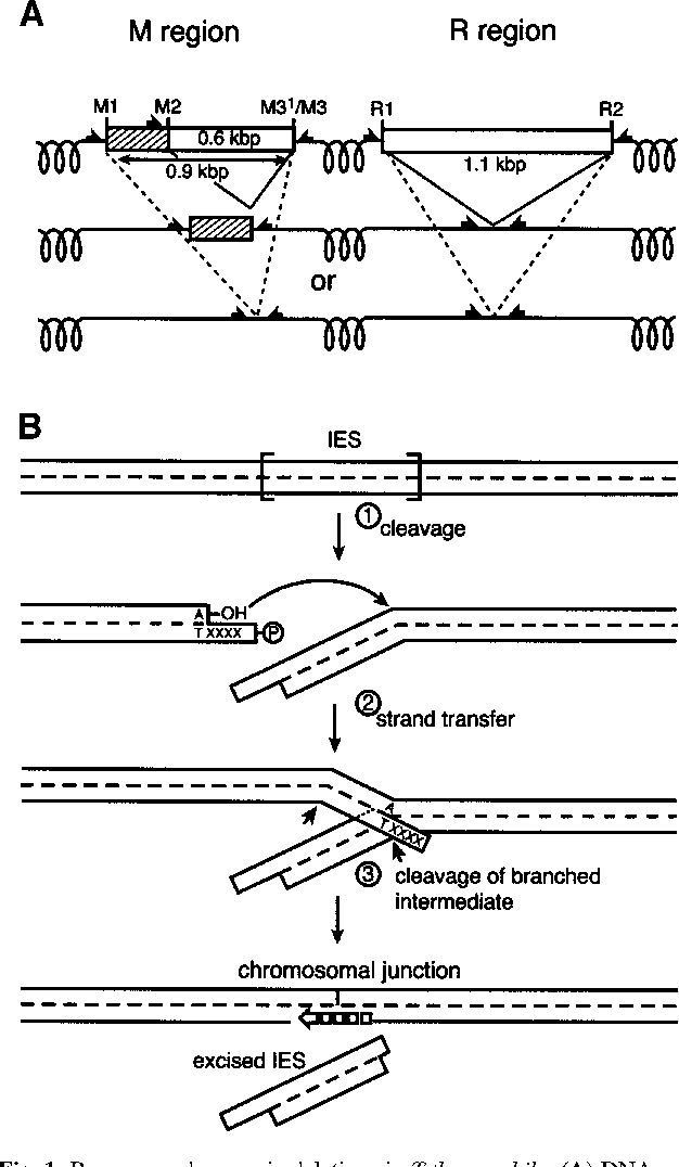 Figure 1 from product analysis illuminates the final steps of ies figure 1 ccuart Gallery