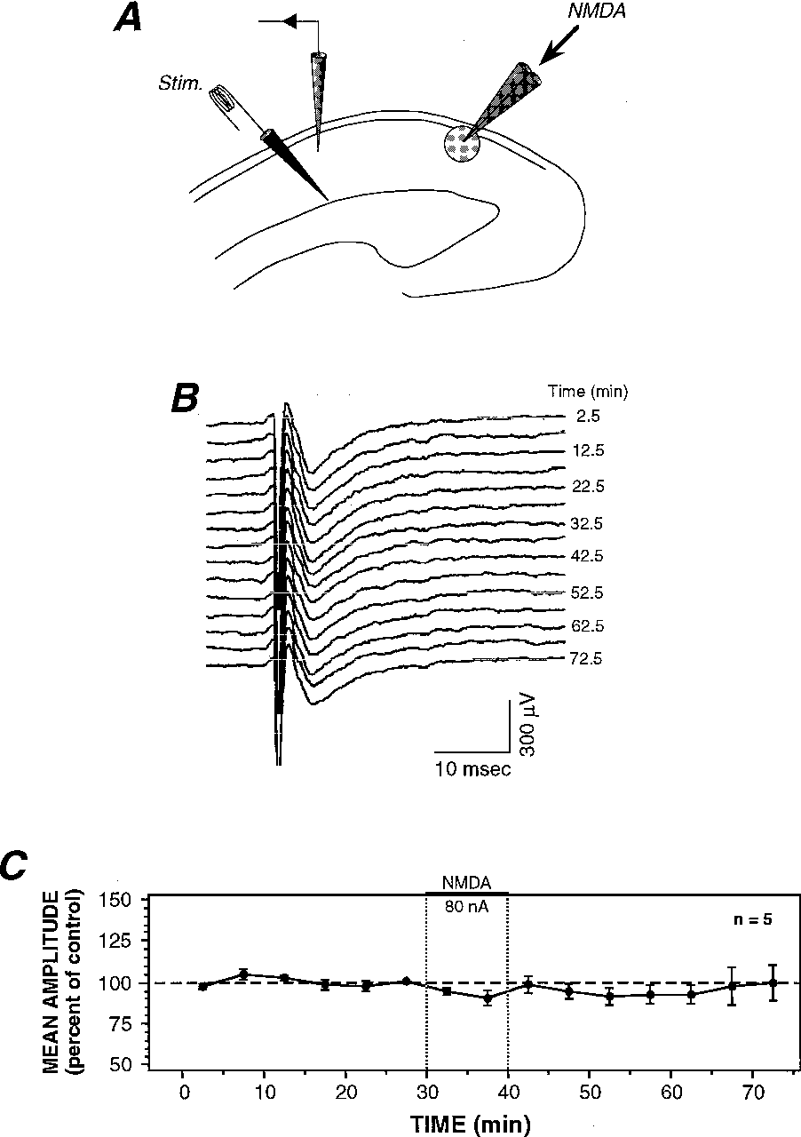 4A±C Evolution of orthodromic field potentials when electrical stimulation  is applied at