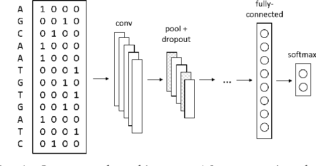 Figure 1 for Interpretable Convolutional Neural Networks for Effective Translation Initiation Site Prediction