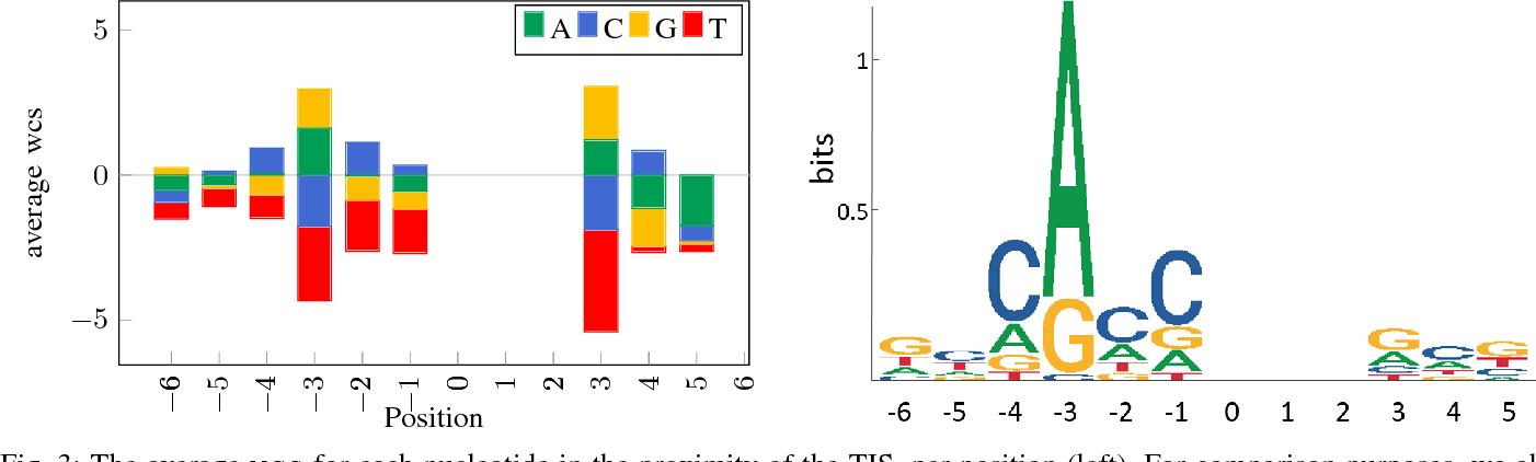 Figure 3 for Interpretable Convolutional Neural Networks for Effective Translation Initiation Site Prediction