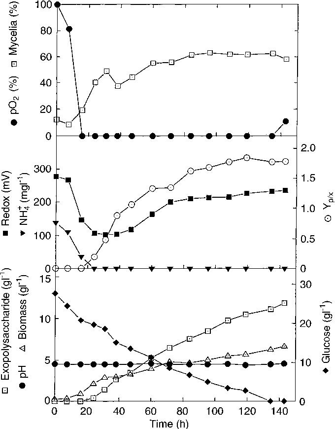 The production of exopolysaccharides by Aureobasidium pullulans in