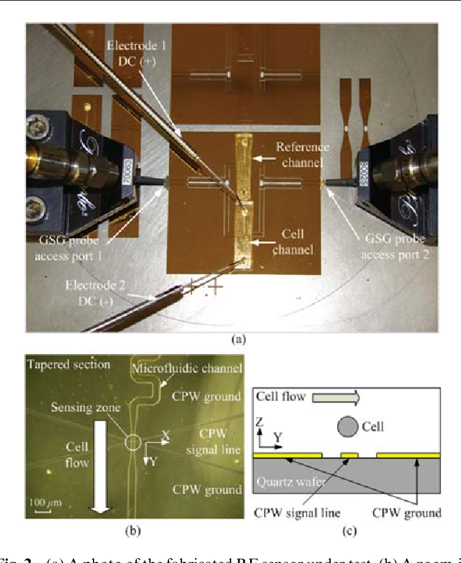 Fig. 2 (a) A photo of the fabricated RF sensor under test. (b) A zoom-in microscopic photo of the tapered section. (c) Cross section of the sensing zone to indicate possible cell positions.