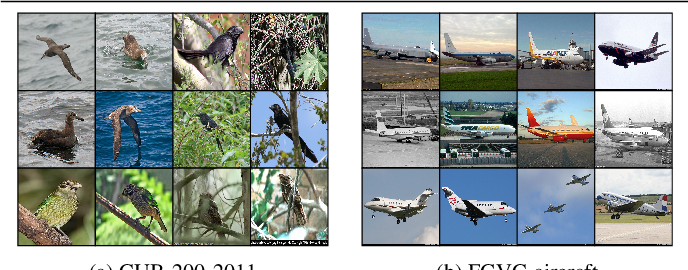 Figure 4 for Group Based Deep Shared Feature Learning for Fine-grained Image Classification