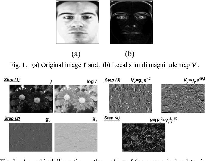 Figure 1 for Spatial Stimuli Gradient Sketch Model