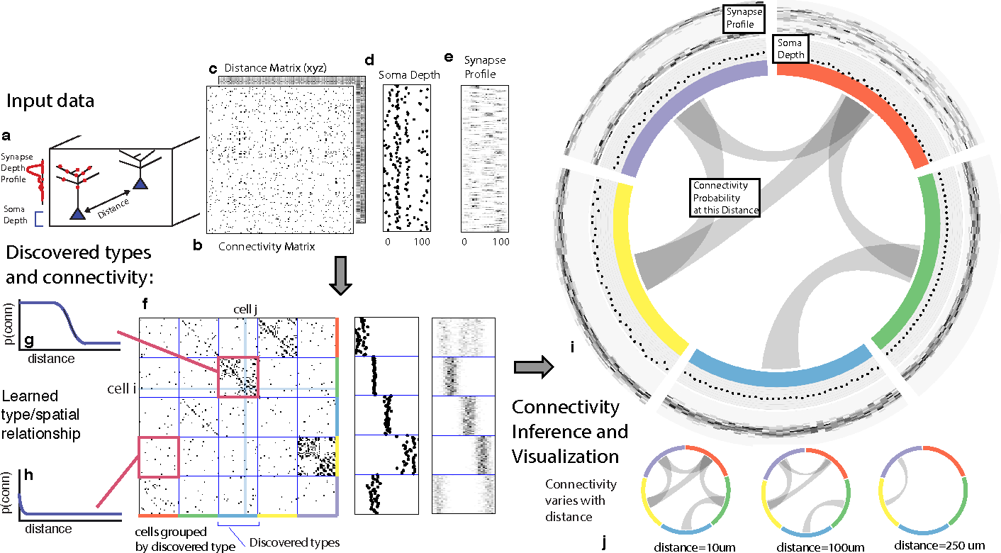 Figure 1 for Automatic discovery of cell types and microcircuitry from neural connectomics