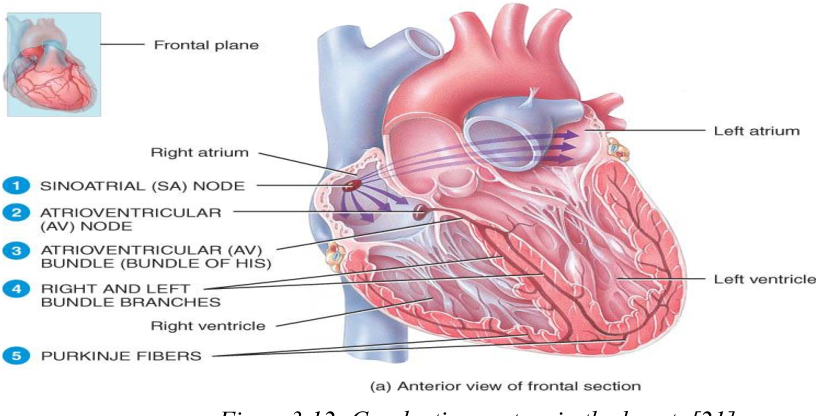 Investigation in the Simulation of the Human Heart Structure from ...