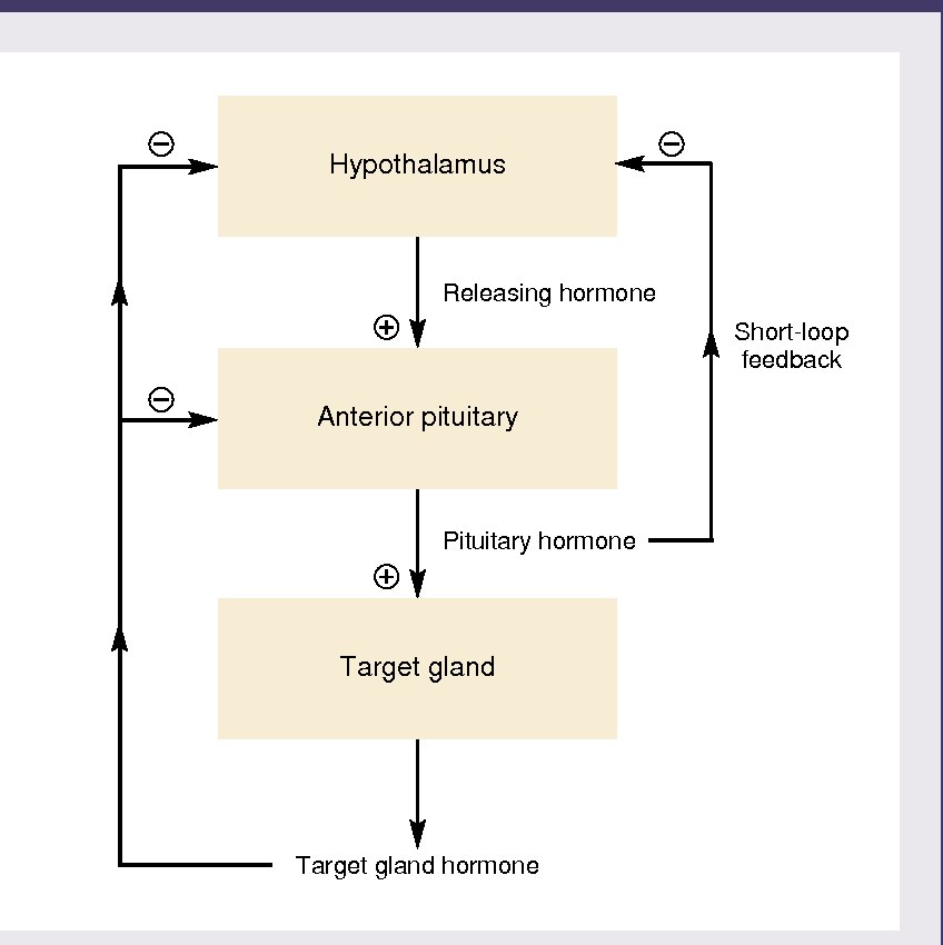 Figure 2 From The Endocrine System An Overview Semantic Scholar