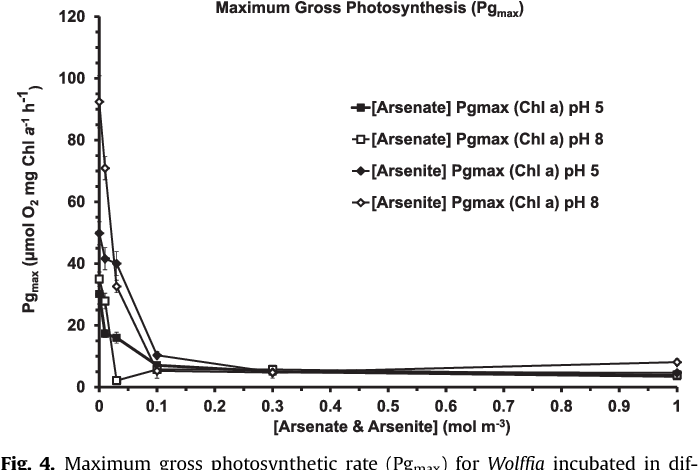 Arsenic toxicity in the water weed Wolffia arrhiza measured