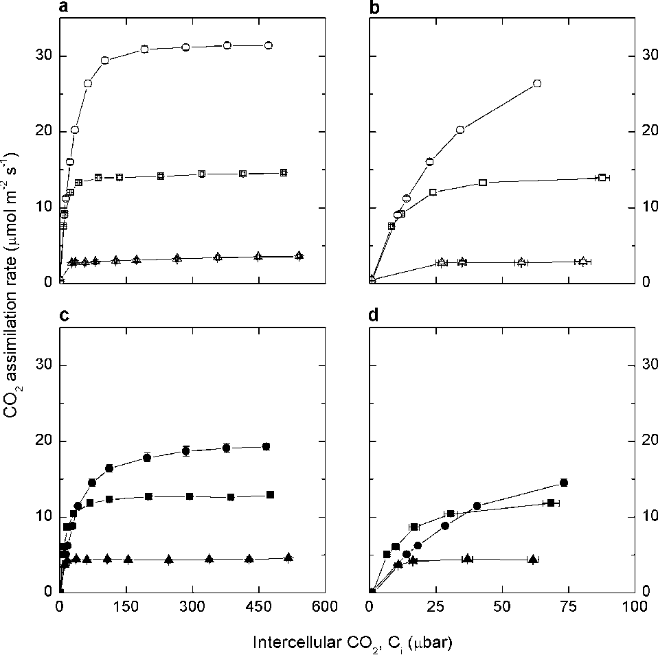 Growth of the C4 dicot Flaveria bidentis: photosynthetic acclimation ...