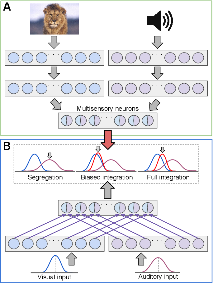Figure 2 for Towards Modeling the Interaction of Spatial-Associative Neural Network Representations for Multisensory Perception