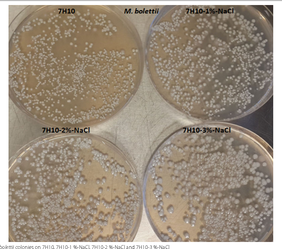 Fig. 1 M. bolettii colonies on 7H10, 7H10-1 %-NaCl, 7H10-2 %-NaCl and 7H10-3 %-NaCl