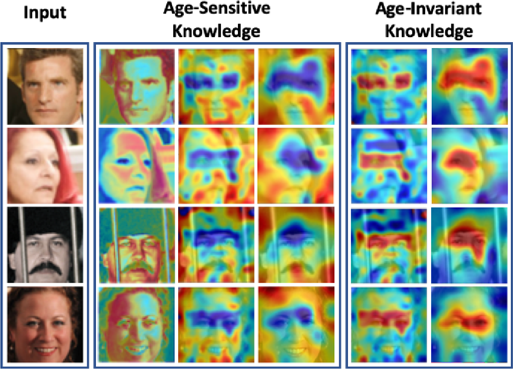 Figure 2 for Beyond Disentangled Representations: An Attentive Angular Distillation Approach to Large-scale Lightweight Age-Invariant Face Recognition