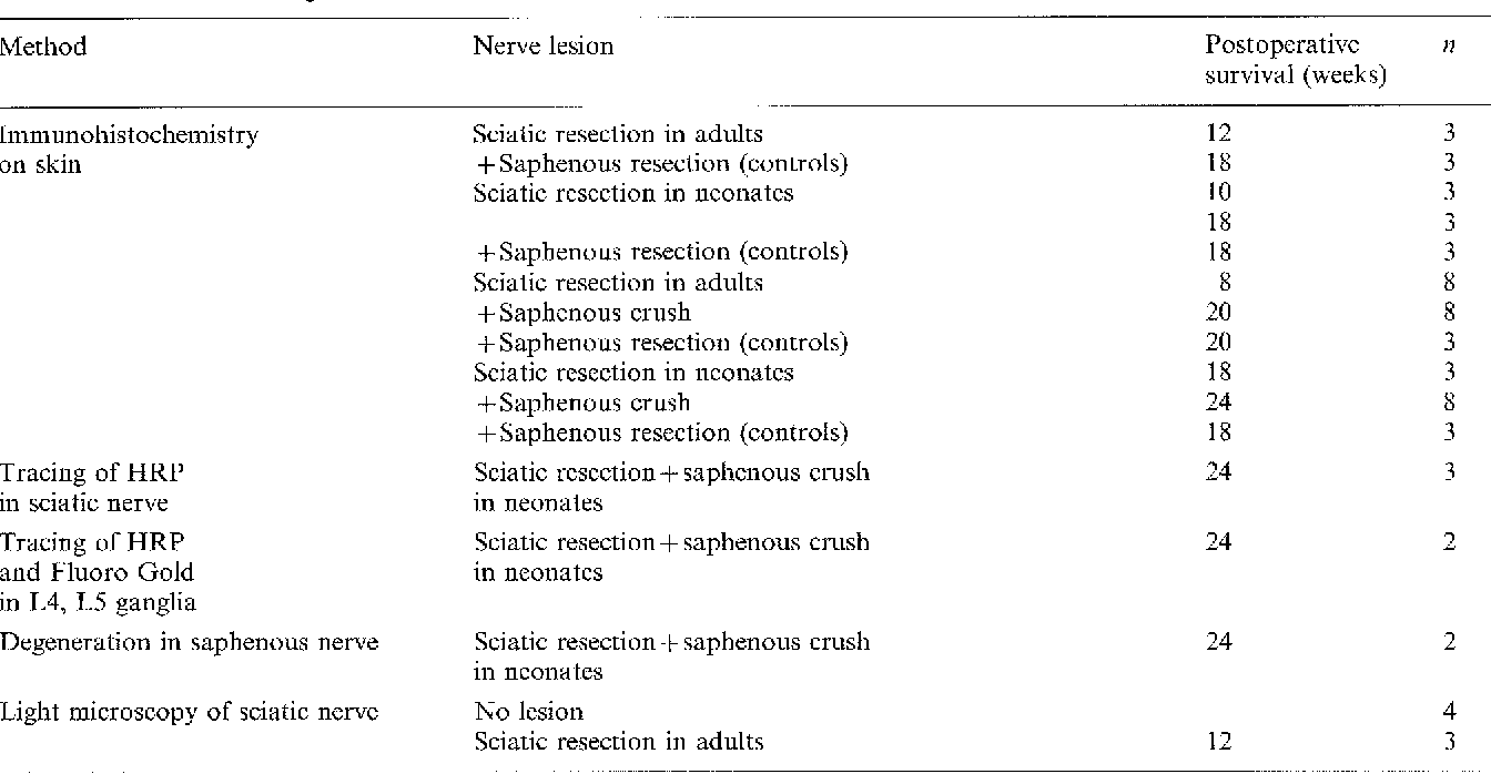 Table 1. Summary of operative procedures and methods used. Nerve injuries were performed in the left hind leg. The right foot sole was used as control for labelling with antisera in the immunohistochemical study