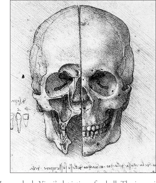 Figure 1 from Evolution of the paranasal sinuses\' anatomy through ...