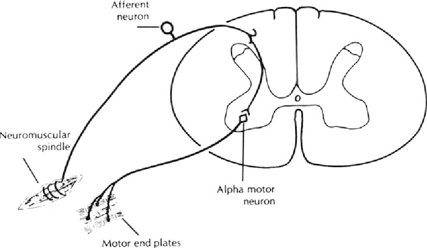 Figure 19 2 From Avian Physiology