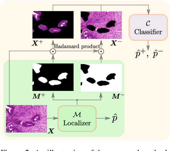 Figure 3 for Deep Interpretable Classification and Weakly-Supervised Segmentation of Histology Images via Max-Min Uncertainty