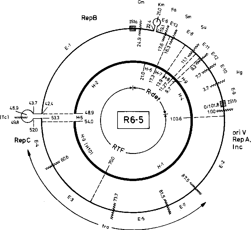 Figure 1 From Instability Of Plasmid Dna Sequences Macro And Micro