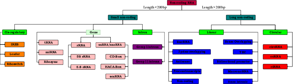 Figure 1 for A Robust and Precise ConvNet for small non-coding RNA classification (RPC-snRC)