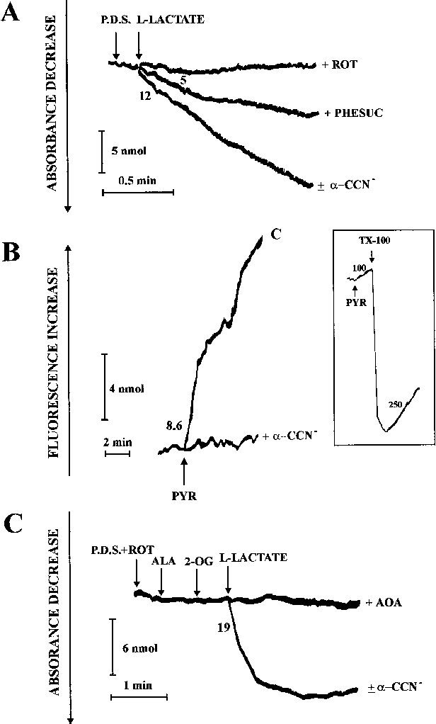 L lactate transport into rat heart mitochondria and reconstruction figure 1 ccuart Image collections