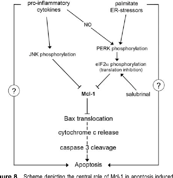 Mcl-1 downregulation by pro-inflammatory cytokines and