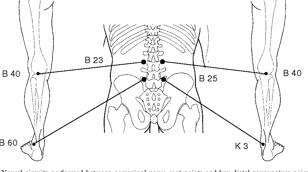 Figure 54 23 From Etps Neuropathic Acupuncture 54