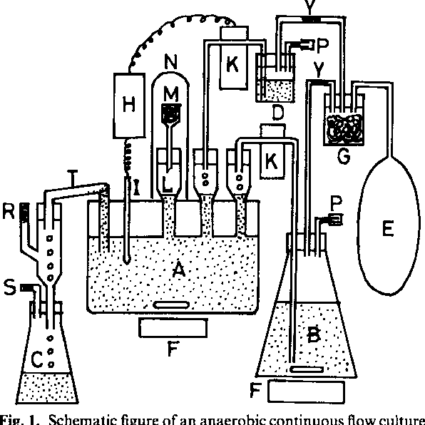 Figure 1 From Potent Antagonism Of Escherichia Coli Bacteroides O