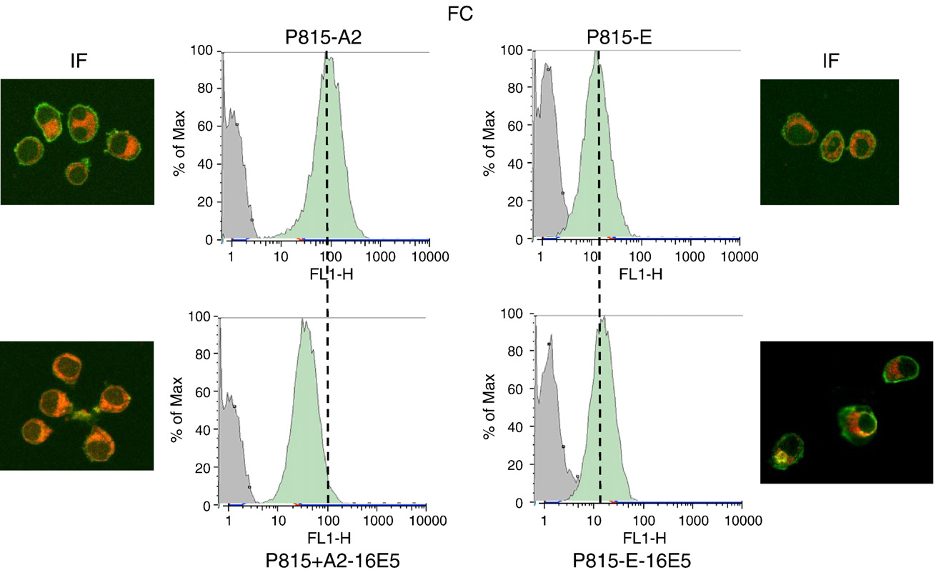 HPV-16 E5 down-regulates expression of surface HLA class I and