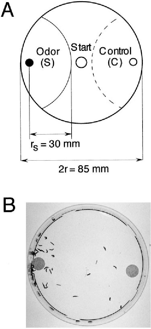 Smell and taste perception in Drosophila melanogaster larva: toxin ...