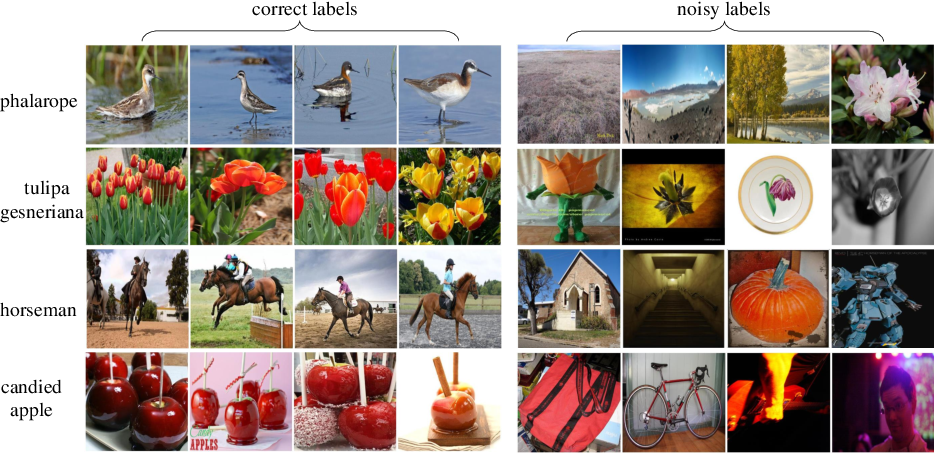 Figure 1 for Weakly Supervised Learning with Side Information for Noisy Labeled Images