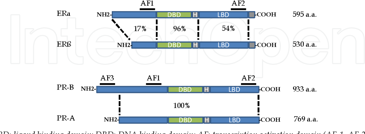 Figure 3 from Pharmacology of Hormone Replacement Therapy in