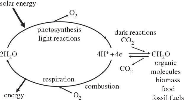 Figure 1 from from natural to artificial photosynthesis semantic figure 1 a diagrammatic representation of energy flow in biology the light reactions of publicscrutiny Gallery