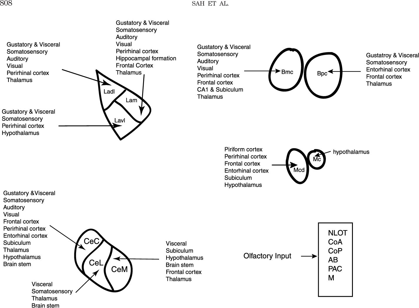 Figure 2 from The amygdaloid complex: anatomy and physiology ...