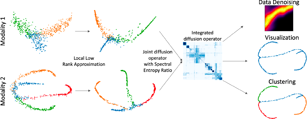 Figure 1 for Multimodal data visualization, denoising and clustering with integrated diffusion