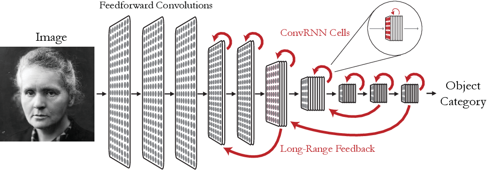 Figure 1 for Task-Driven Convolutional Recurrent Models of the Visual System