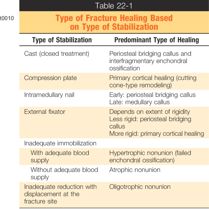 Type Of Fracture Healing Based On Type Of Stabilization Semantic