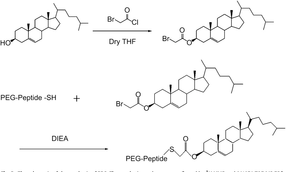 Fig. 2. The schematic of the synthesis of PPC. The synthetic pro